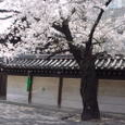Aoyama_tempio